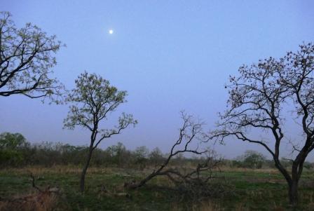 Puut ja aamukuu